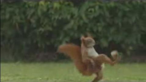 Ecureuil jongleur (VIDEO)