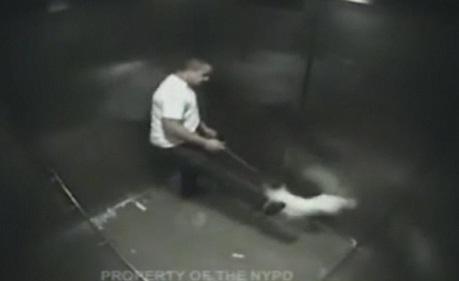 Un «homme» frappe violemment un chien dans un ascenseur (VIDEO)