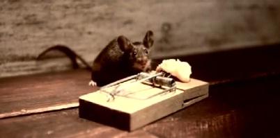 Pub pour un fromage avec une souris qui a la pêche (VIDEO)