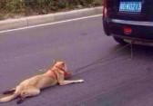 Maltraitance chien chine