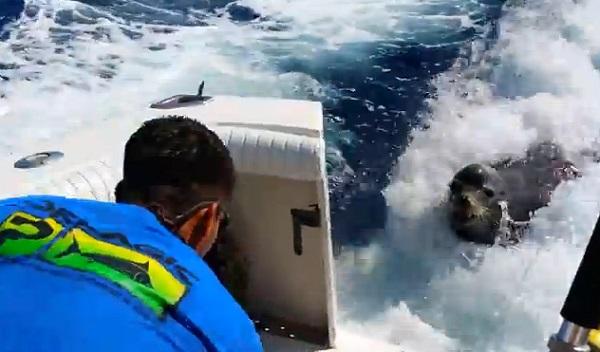 Des pêcheurs se font racketter par une otarie (vidéo)