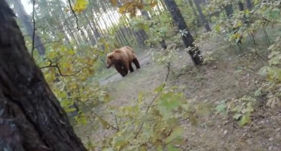 Attaqué par un ours, un cycliste filme la scène avec sa GoPro (vidéo)