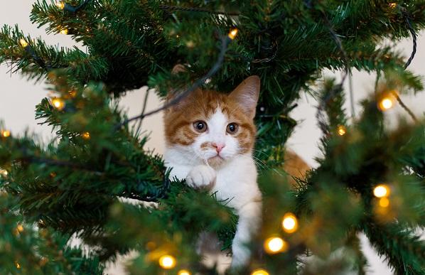 Fun : quand les chats s'attaquent aux sapins de Noël ! (vidéo)