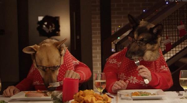 Des animaux partagent un repas de Noël (vidéo)