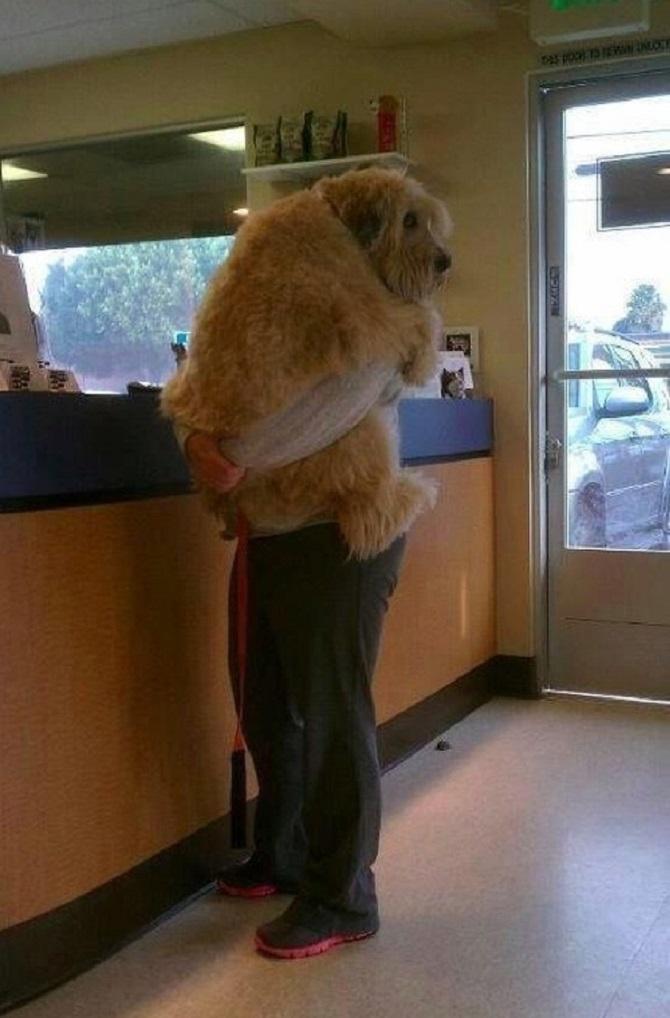 Chien vétérinaire (9)