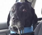 9 chiens qui viennent juste de comprendre qu'ils allaient chez le véto
