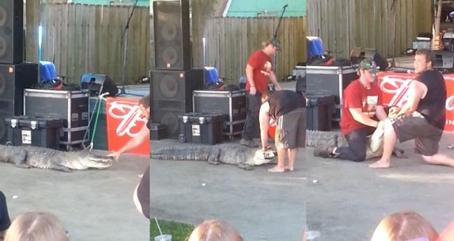 Choc : un alligator attaque un dompteur pendant une représentation