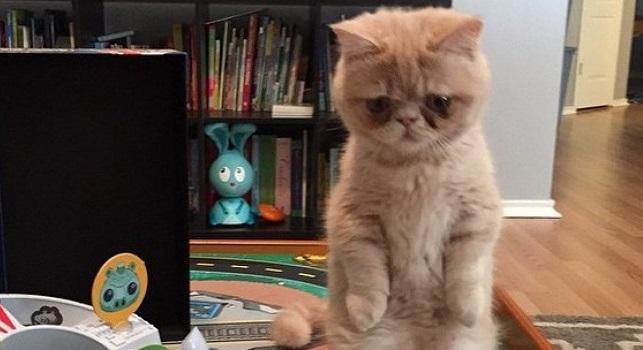 George, le chat qui préfère se tenir debout, comme un homme !