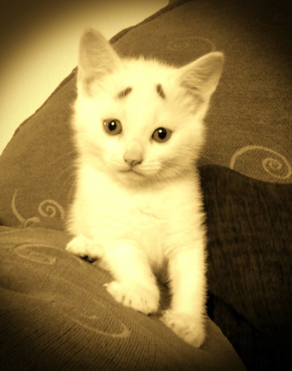 Gary Concerned Kitten (1)