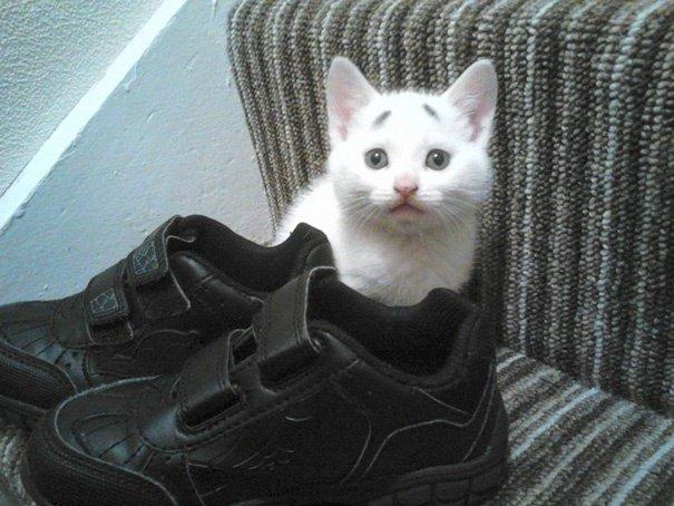 Gary Concerned Kitten (10)