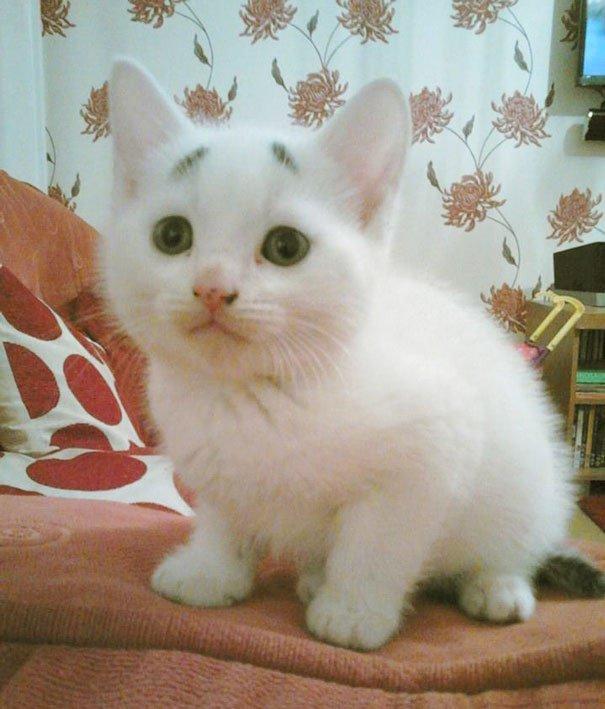 Gary Concerned Kitten (12)
