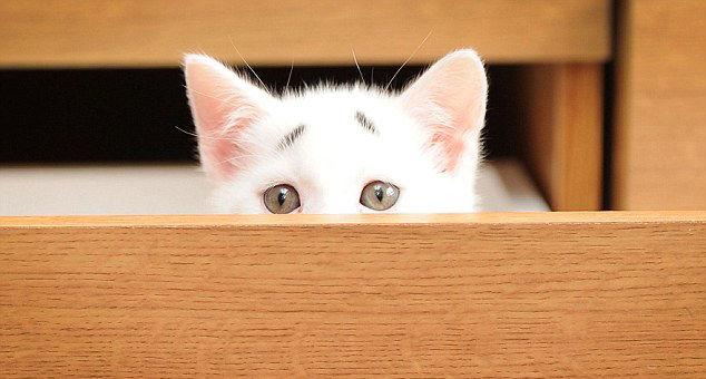 Gary Concerned Kitten (13)