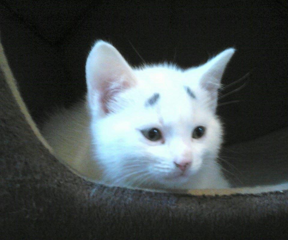 Gary Concerned Kitten (2)