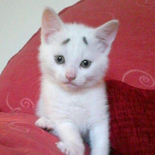 Gary Concerned Kitten (3)