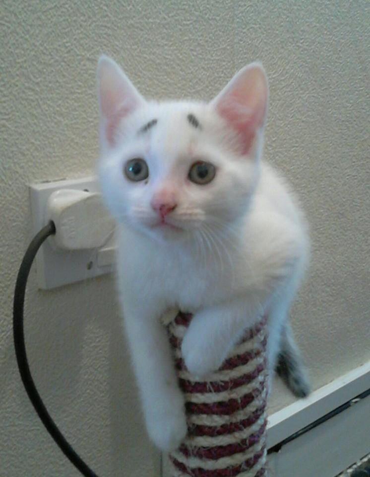 Gary Concerned Kitten (4)