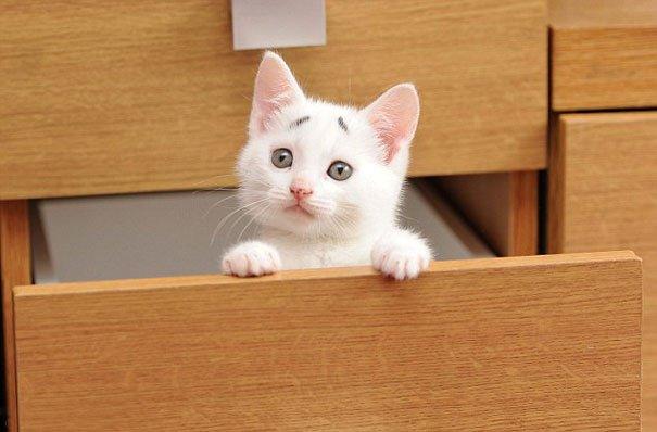 Gary Concerned Kitten (5)
