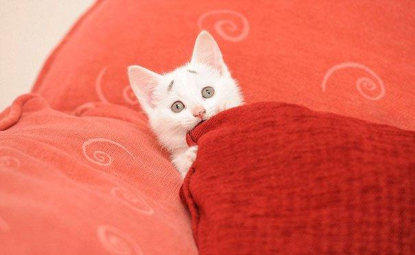 Gary Concerned Kitten (6)