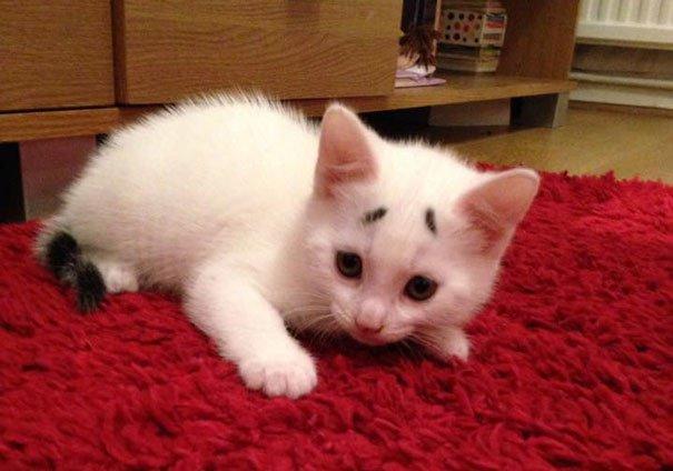 Gary Concerned Kitten (7)
