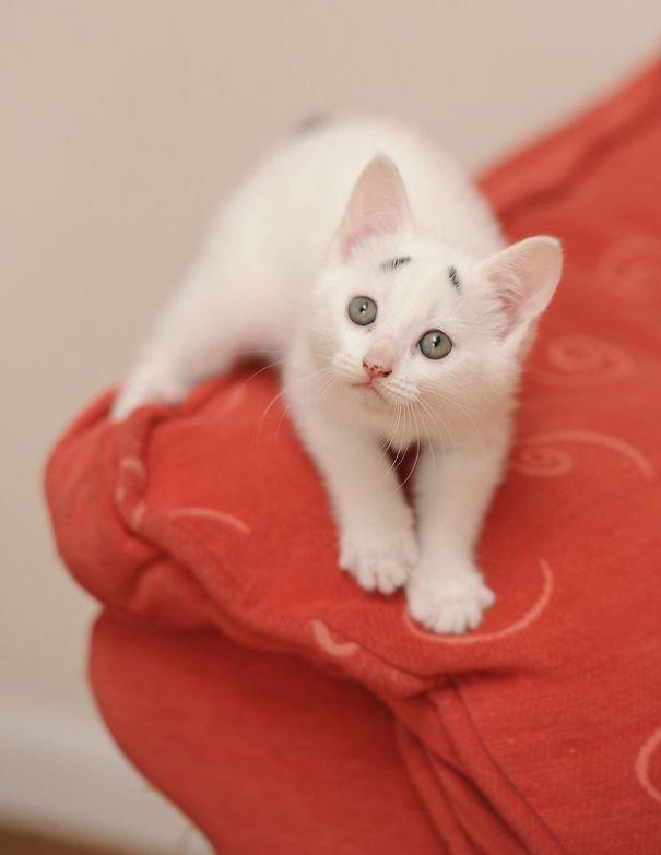 Gary Concerned Kitten (8)