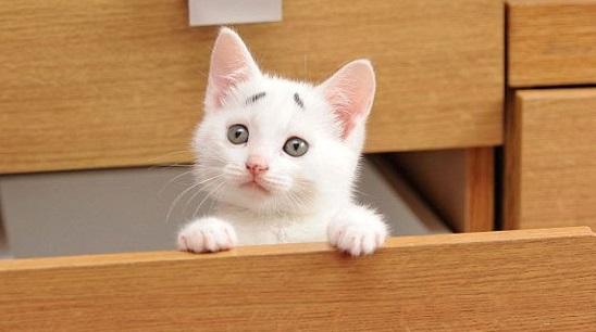 Faites la connaissance de Gary, le chaton au «regard inquiet»