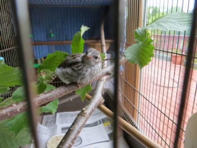 oiseau-veterinaire-11