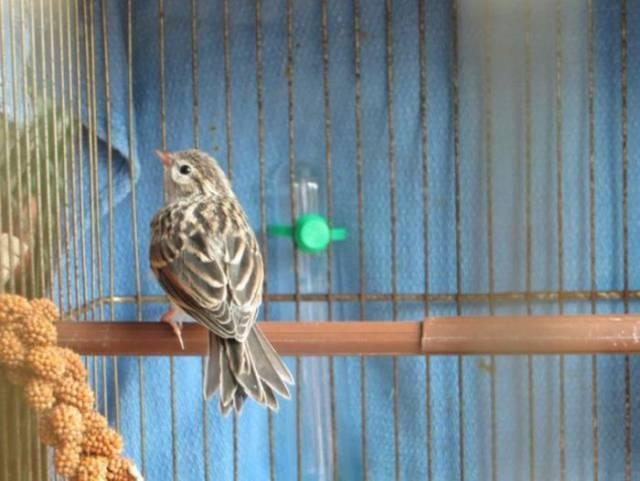 oiseau-veterinaire-12