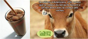 Pour 16 millions d'Américains, le lait chocolaté vient de vaches marron