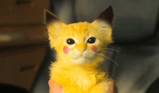 Ils capturent un Pikachu ! (vidéo)