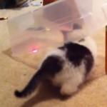 Piéger son chat avec un pointeur laser (vidéo)