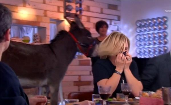 C à vous : Un âne fait ses besoins en pleine émission (vidéo)