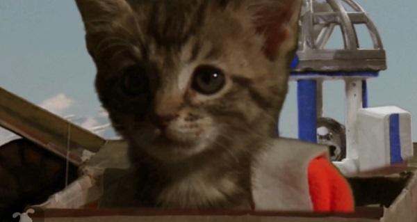 Star Wars 7 : la bande annonce rejouée par des chatons (vidéo)